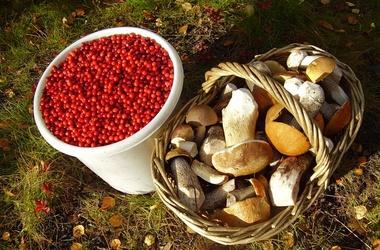 Український бізнесмен, щоб не платити податки, продавав гриби і ягоди сам собі