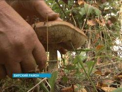 В Башкортостані розпочався грибний сезон