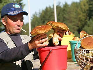 У Ярославській області відмічається небувалий урожай білих грибів.