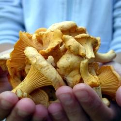 У Красноярську розпал сезону грибів
