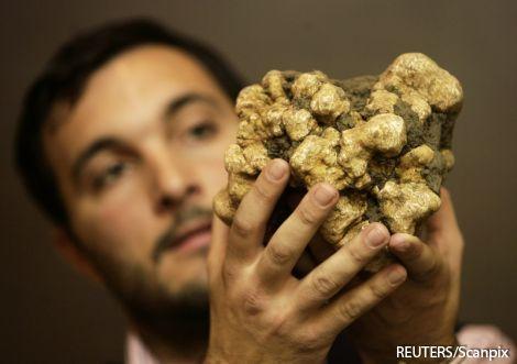 Трюфель - один з найдорожчих делікатесів у світі, і цінується дорожче золота