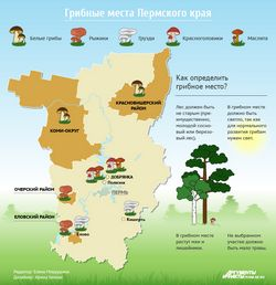 У латвии створюється карта найкращих місць для збору ягід та грибів