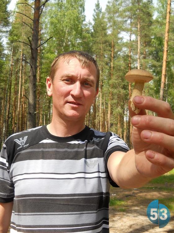 Зазвичай в червні першими з'являються зморшки, а підберезники в Новгородській області виростають до кінця літа або восени.