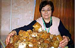 У пензенських лісах з'явилися перші гриби