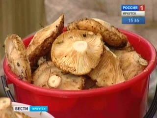 У Прибайкалля хороший врожай грибів і ягід