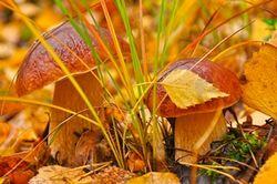 У Рязанському районі пройде чемпіонат зі збору грибів