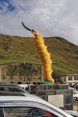 У звичайний час тибетці - наймиролюбніші люди на планеті. Але тільки не під час збору кордіцепса.