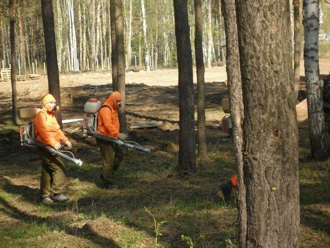 У Волгограді починається обробка лісів від шкідників