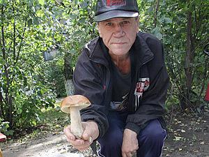 Під володимирських лісах пішли гриби
