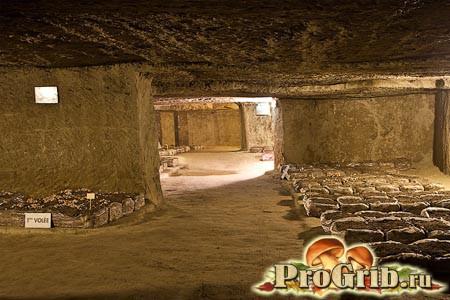Печериці в печері