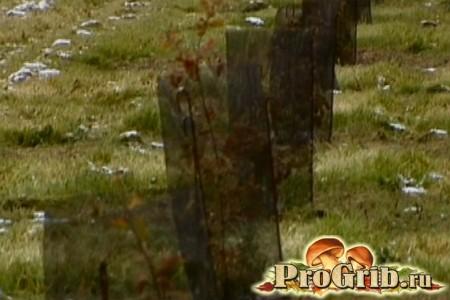 дерева для вирощування трюфелів