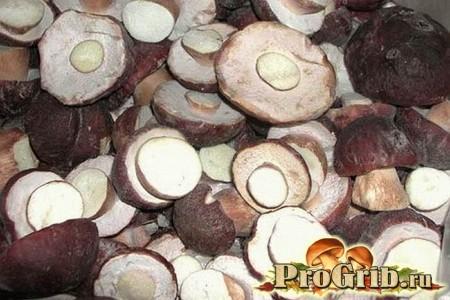 Капелюшки білих грибів