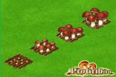 Вирощуємо білі гриби