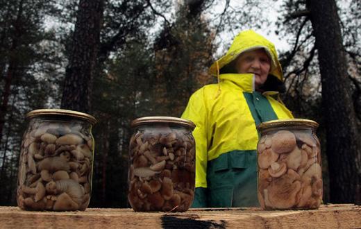 Заготовляємо гриби на зиму