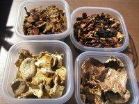 Заготівля грибів