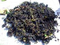 Заготовки з дикого винограду
