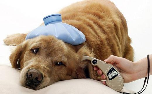 Захист собак від бліх і кліщів