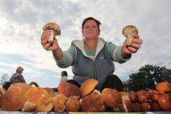 Жителі криму поїдуть в регіони росії за грибами