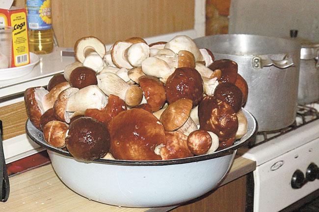 Зоготовка грибів